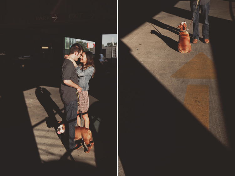adorable engagement pictures english bulldog