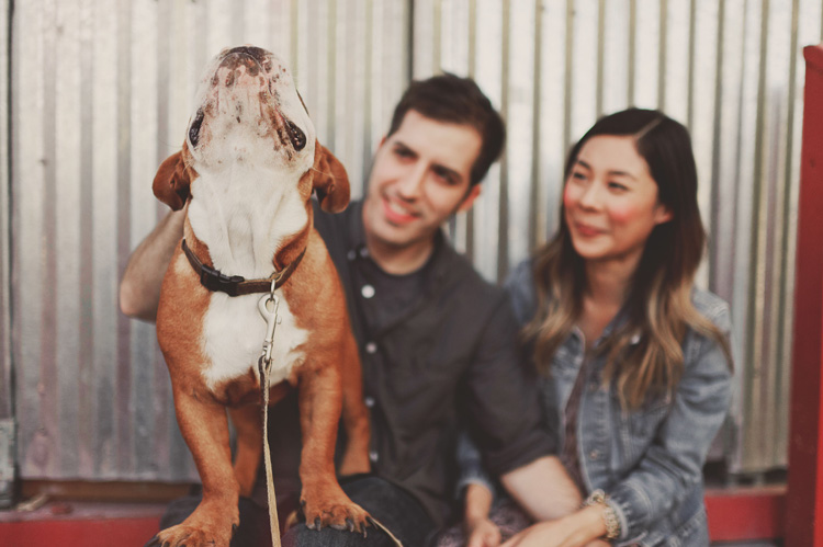 english bulldog cute engagement pictures