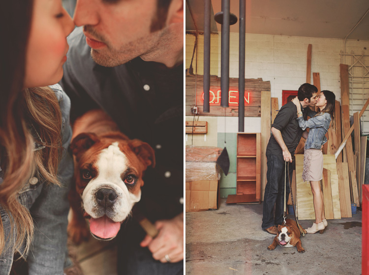 cute english bulldog engagement session