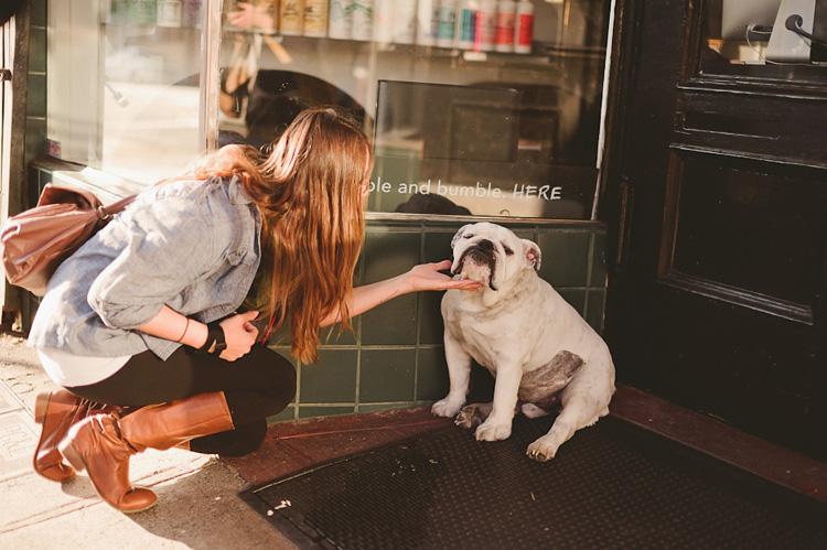 english bulldog cute san francisco