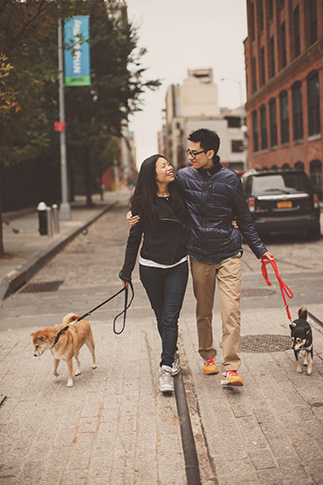 Shiba dogs new york portrait session