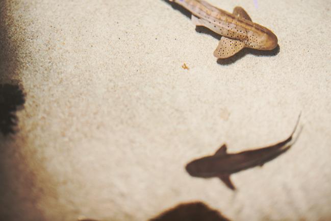 sharks at baltimore aquarium