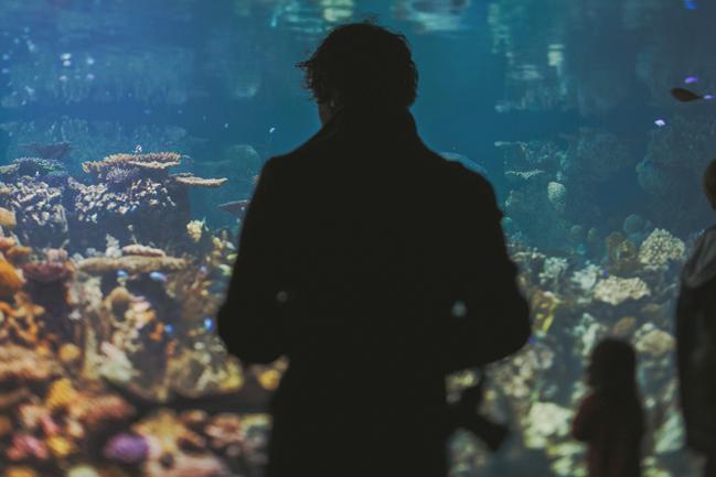 National Aquarium Portraits 14