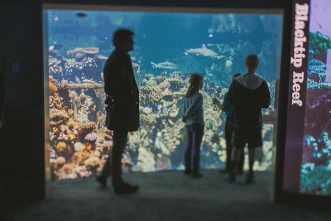 National Aquarium Portraits 15