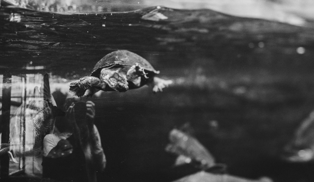 black and white turtle photo