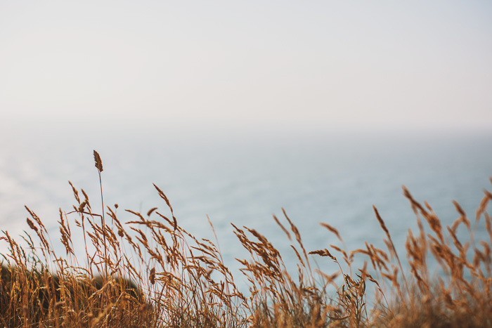 wheat growing on beach in france 22
