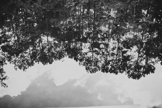 charleston sc landscapes