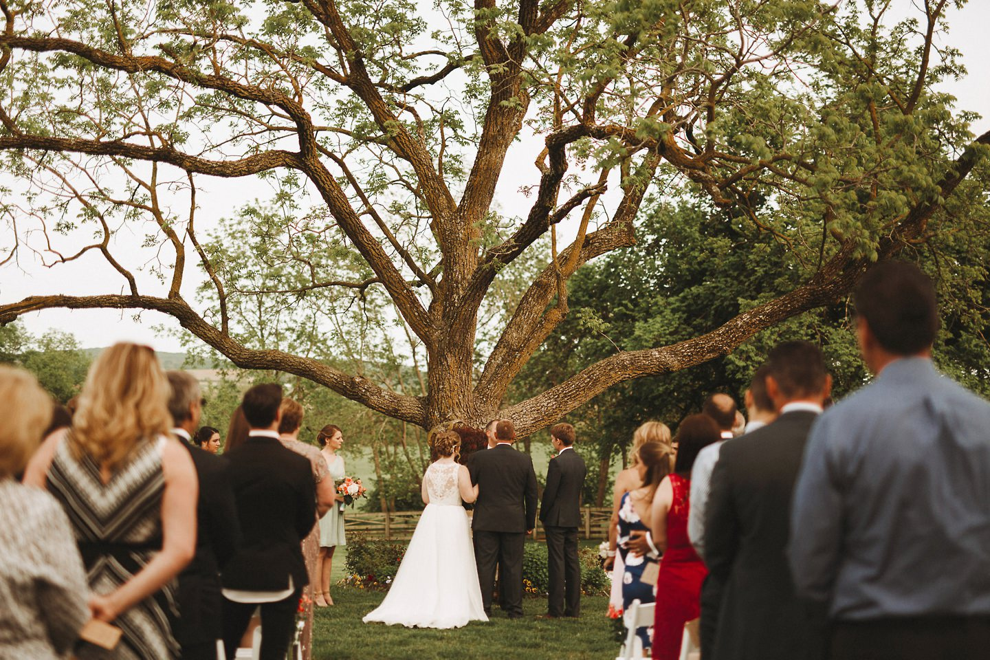 getting married in front of a tree