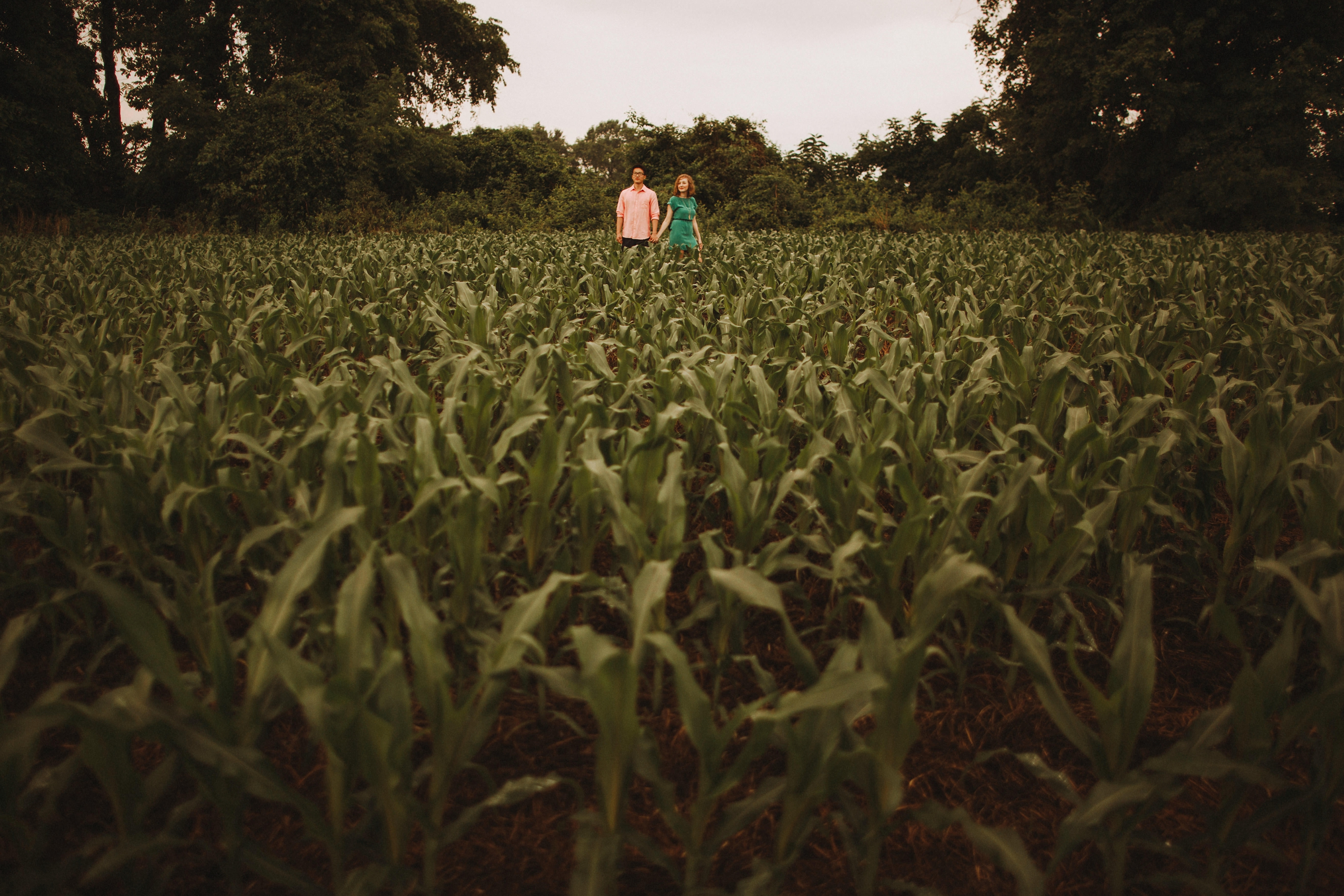 corn field engagement sessions