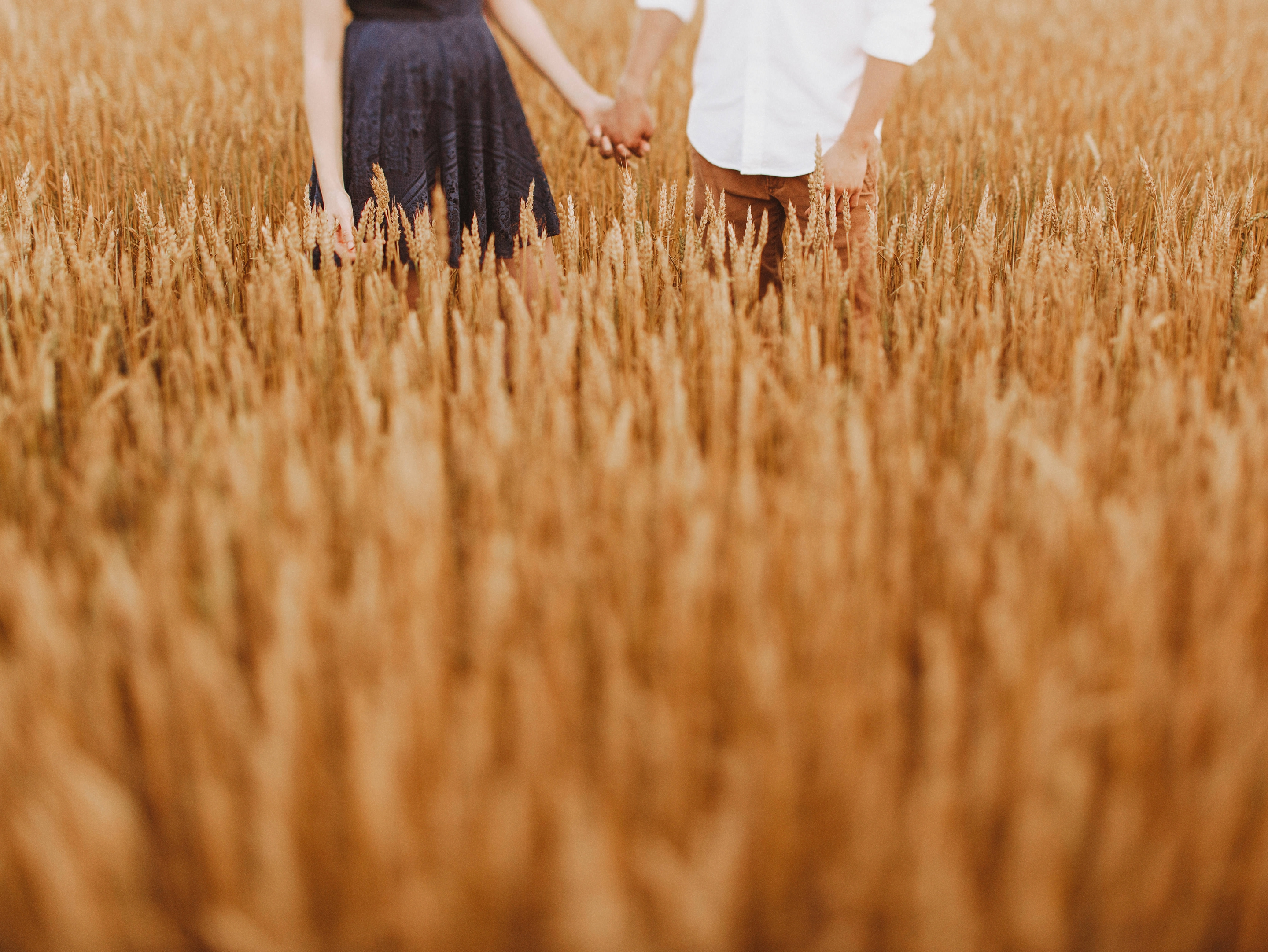 wheat field engagement pictures